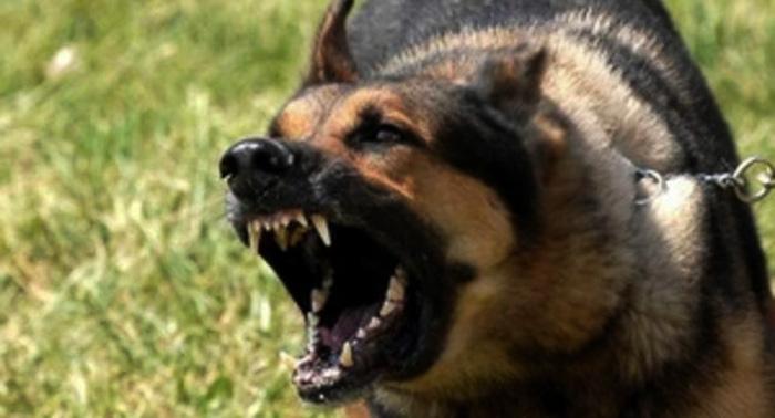 В Никополе бешеный пес покусал шестерых человек
