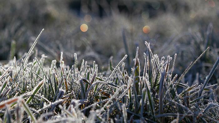В Украине зафиксировали первые заморозки